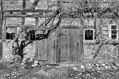Holztor und Fenster - verfallenes Fachwerkgebäude, Lagerhaus - historische Architektur in der Stadt Barth.