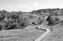 Holzweg durch das Naturschutzgebiet am Pramer Ort, dem östlichen Teil der Halbinsel Zingst am Rand der Sundischen Wiesen. Wanderweg zur Hohen Düne - größte unbewaldetes Dünenfeld an der deutschen Ostseeküste.
