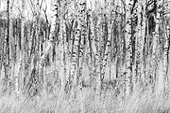 Naturbelassene Landschaft  in den Sundischen Wiesen auf der Halbinsel Zingst in Mecklenburg Vorpommern. Die Sundischen Wiesen oder auch die Sundische Wiese bilden zusammen mit dem Pramort den östlichen Teil der Halbinsel Zingst.