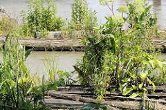 Holzsteg mit Grünpflanzen bewachsen - Marina im Holzhafen von Hamburg Rothenburgsort.