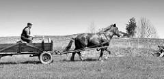 Ursprüngliches Masuren / Polen; Bauer mit Pferd und Wagen auf der Wiese.