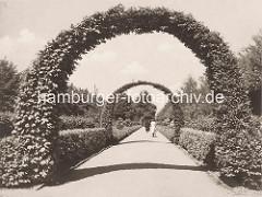 Grünanlage an der Bebelallee in Hamburg Winterhude - Heckenbogen, Buchenhecke; Spaziergängerin.