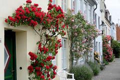 Blühende Stockrosen an Hausfassaden in der Straße An der Mauer in der Hansestadt Lübeck.