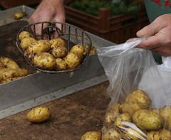Die Vierlande gehören zum Bezirk Bergedorf und bestehen aus den Orten Kirchwerder, Neuengamme, Altengamme und Curslack - die Gegend wird als der Gemüsegarten / Blumengarten Hamburgs bezeichnet - die Bauern verkaufen ihre Erzeugnisse häufig auch d