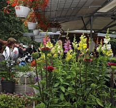 Marktstand mit Vierländer Pflanzen und Blumen auf dem Wochenmarkt von Hamburg Bergedorf.  Die Vierlande gehören zum Bezirk Bergedorf und bestehen aus den Orten Kirchwerder, Neuengamme, Altengamme und Curslack - die Gegend wird auch als der Blumen