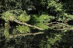 Uferbereiche der Bille sind bei Hochwasser überschwemmt und bieten so der Tier und Pflanzenwelt ein wichtiges Ökosystem. Umgestürzte Baumstämme liegen im Wasser der Bille und vermodern, ein anderer Stamm ragt vom Flussufer über das Wasser und spi