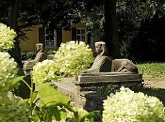 Hinter den weissen Blüten von Hortensien zwei Sphinx - Skulpturen im Garten des Bergedorfer Rathauses; zwischen den Sphingen führen in der Gartenanlage Stufen zum  Rathausgebäude. Im Hintergrund ist das Bergedorfer Standesamt zu erkennen - die Fe