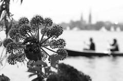 Seeufer mit Pflanzen an der Hamburger Aussenalster - Schemen eines Kanus, Kirchtürme der Stadt.