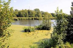 Ehem. Hafenbecken vom Peutehafen in Hamburg Veddel, jetzt Naturschutzgebiet.