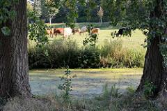 Lauf der Bille in Hamburg Lohbrügge - grasende Kühe auf der Weide in Hamburg Billwerder.