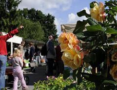 Auf dem Wochenmarkt im Hamburg Lohbrügge stehen Vierländer Markthändler mit ihren frischen Erzeugnissen aus dem Bergedorfer Umland. Eine Gärtnerei verkauft auf dem Wochenmarkt Pflanzen, Stauden und hochstämmige blühende Rosenstöcke. Die Bergedorf