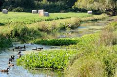 Lauf der Bille - Grenzfluss der Stadtteile Hamburg Billwerder / Lohbrügge; Enten schwimmen auf dem Wasser - Heuballen liegen auf der Wiese.