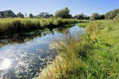 Gräser wachsen am Ufer der Bille - Blick über den Fluss von Hamburg Lohbrügge nach Billwerder.