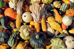 Kürbisse und Maiskolben - Herbstdekoration auf dem Landmarkt / Herbstmarkt in Hamburg Bergedorf.