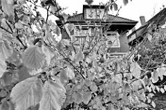 Vorgarten mit Herbstblättern in Hamburg Niendorf - Stadtvilla in einer Seitenstraße.