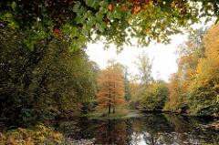 Teich mit Sumpfzypresse im Herbst - Herbstbäume am Wasser; Bilder aus Hamburg Niendorf / Gehege.