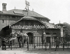 Historische Aufnahme vom Tierpark / zoologischer Garten in den Hamburger Wallanlagen. Elephantenhaus, erbaut 1880 - ein Elefant steht in einem Freigehege hinter einem Metallzaun und wird gefüttert.