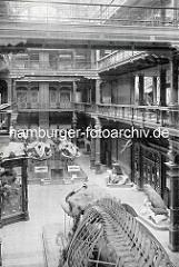 Innenansicht vom Naturhistorischen Museum in Hamburg - Lichthof mit Ausstellungsstücken.