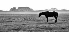 Einsames Pferd steht auf einer Weide der Nordseeinsel Neuwerk - im Hintergrund Häuser hinter dem Deich.