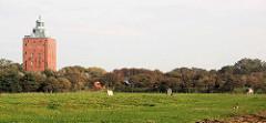 Kühe auf der Weide - lks. der historische Leuchtturm der Insel Neuwerk.