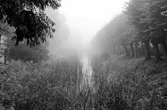 Norder Wallgraben in Otterndorf - Schilf und Alleebäume verschwinden im Nebel.