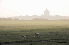 Morgennebel über der Insel Neuwerk - Kühe auf der Weide; im Hintergrund der Nordseedeich mit Radfahrer / Leuchtturm.