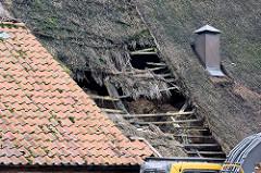Eingefallenes Reetdach - Dachkonstruktion aus Holz / morsche Holzbretter. Bauernhaus in Tangstedt / Ortsteil Wilstedt.