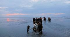 Wattfahrt mit Perdewagen am Abend - Touristen werden durch das Nordseewatt von der Insel Neuwerk nach Duhnen gebracht.