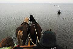 Wattfahrt mit Perdewagen  - Touristen werden durch das Nordseewatt von der Insel Neuwerk nach Duhnen gebracht. Pricken, umgekehrte Reisigbesen zeigen die Fahrtroute durchs Wasser.