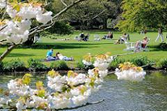 Frühling in Hamburg - Grünanlage an der Alster; sonnenhungrige liegen auf der Wiese; blühende Zierkirschen.