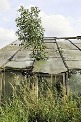 Verfallenes Glashaus / Treibhaus in Hamburg Neuengamme - Glasscheiben sind kaputt, Sträucher wachsen durch das Glasdach.