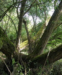 Das Naturschutzgebiet Heuckenlock ist eines der im Hamburger Grossraum vorkommenden Süsswasserwatten und -tideauen; ca. 400 Pflanzenarten haben sich im Heuckenlock angesiedelt.