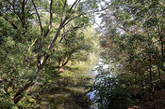 Blick auf die Gooseelbe in Hamburg Kirchwerder - Bäume und Sträucher stehen  dicht am Flussufer.