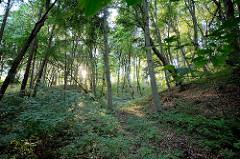 Dichter Wald in der Morgensonne - Rundweg am Tollensesee zwischen Neubrandenburg und Neustrelitz