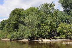 Ufer der Süderelbe beim Naturschutzgebiet Heuckenlock; die Bäume und Sträucher wachsen bis an das Elbufer.