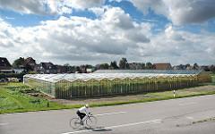 Treibhäuser aus Glas stehen am Strassenrand in Hamburg Moorfleet. In diesem Ortsteil von Wilhelmsburg baut die Landwirtschaft neben Blumen auch Gemüse an.