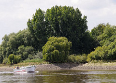Das Ufer der Norderelbe Höhe Spadenlander Busch / Goetjensort ist dicht bewachsen - bis dicht an das Wasser stehen Weiden und Pappeln.