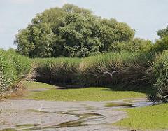 Blick in das Naturschutzgebiet Heuckenlock an der Süderelbe bei Hamburg-Stillhorn; hohes Schilf und Sträucher bietet den Tieren Schutz.