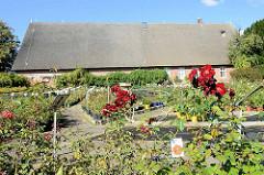 Rosenhof in den Hamburger Vierlanden - blühende Rosen / Rosengarten, im Hintergrund ein lang gestrecktes Reetdach Gebäude.