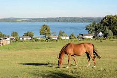 Ferienidylle am Tollensesee bei Neustrelitz / Neubrandenburg.  Pferde grasen auf der Weide, im Hintergrund Ferienhäuser und der See mit Wäldern bis zum Ufer