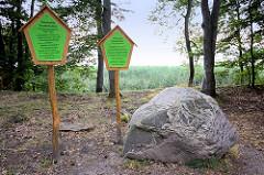 Humboldt Gedenkstein im Wald am Ufer des Tollensesees bei Neustrelitz  / Neubrandenburg. Ein Hügel wurde Alexander von Humboldt zu Ehren Chimborazo genannt.