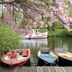 Blüte der japanischen Zierkirsche auf der Liebesinsel im Hamburger Stadtpark; Fahrgastschiff  Alsterflotte.