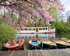 Blüte der japanischen Zierkirsche auf der Liebesinsel: Fahrgastschiff der weißen Alsterflotte.