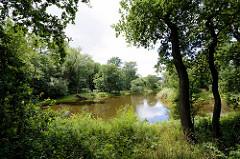 Landschaft / Gartenlandschaft im Beckerbruc, Parkanlage vom Georgium in Dessau-Roßlau.