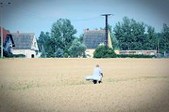 Blick über die Felder am Stadtrand von Roßlau, ein Fahrradfahrer fährt auf einem Feldweg durch ein Kornfeld.