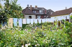 Vorgarten mit blühenden Blumen - Wäsche zum Trocknen auf der Leine - Bilder aus Hamburg Wilstorf.