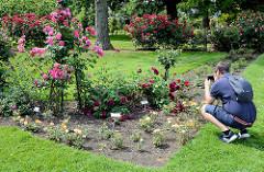 Fotowalk im Rosarium von Uetersen - blühende Rosen im Beet.