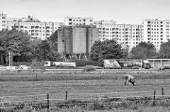 Blick über die Felder bei Hamburg Stillhorn / Wilhelmsburg zur Autobahn A1; eine Kuh steht auf der Weide, dahinter Lastwagenverkehr.