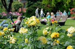 Liegewiese mit Holzbänken - blühende Rosen im Rosarium von Uetersen.