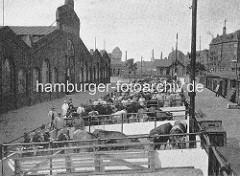 Altes Bild vom Hamburger Schlachthof an der Sternschanze - Rinder im Pferch, re. ein Güterzug am Bahnsteig.